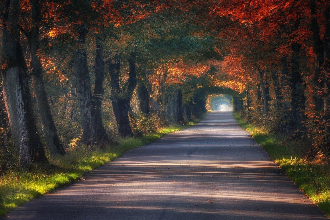 Road: Fall, Tree, Road, Foliage, Tree-Lined