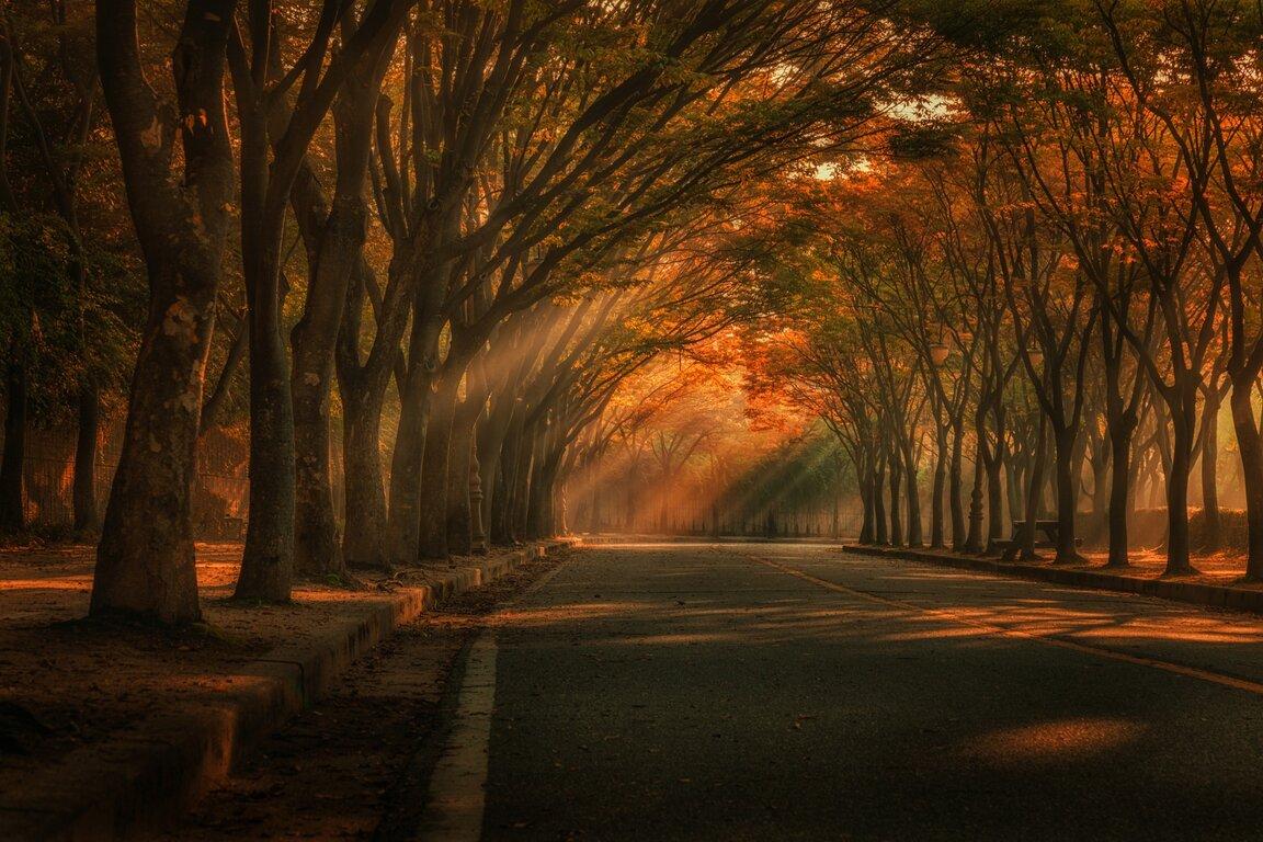 Road: Fall, Sunbeam, Tree, Road, Tree-Lined