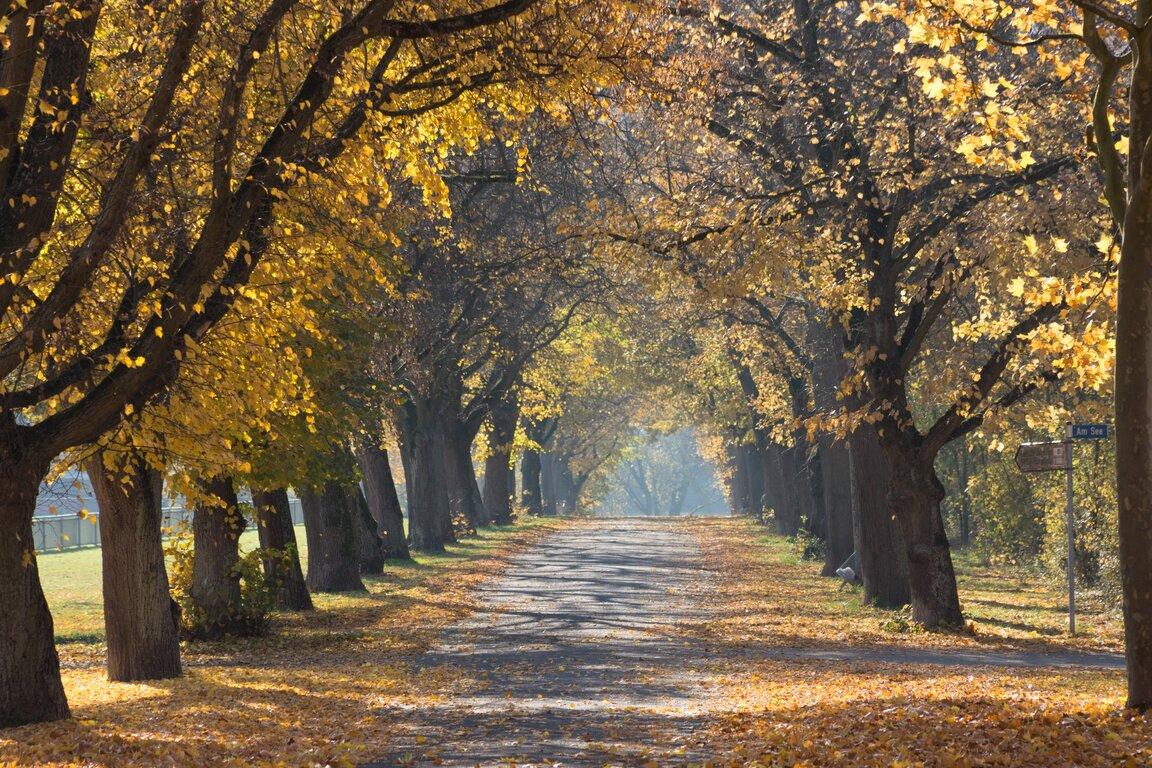 Road: Fall, Tree, Road, Tree-Lined