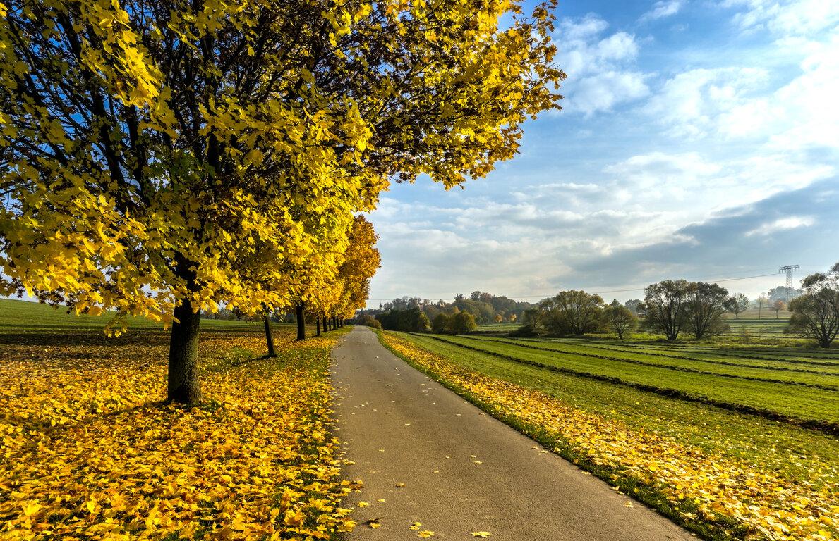 Road: Field, Fall, Cloud, Sky, Tree, Road, Yellow, Foliage, Tree-Lined