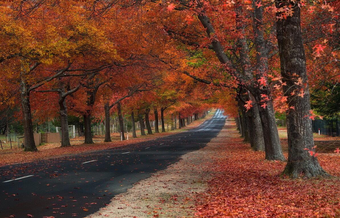 Road: Leaf, Fall, Tree, Road, Tree-Lined