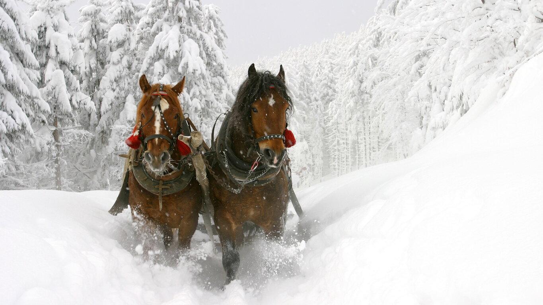 Horse: Snow, Winter