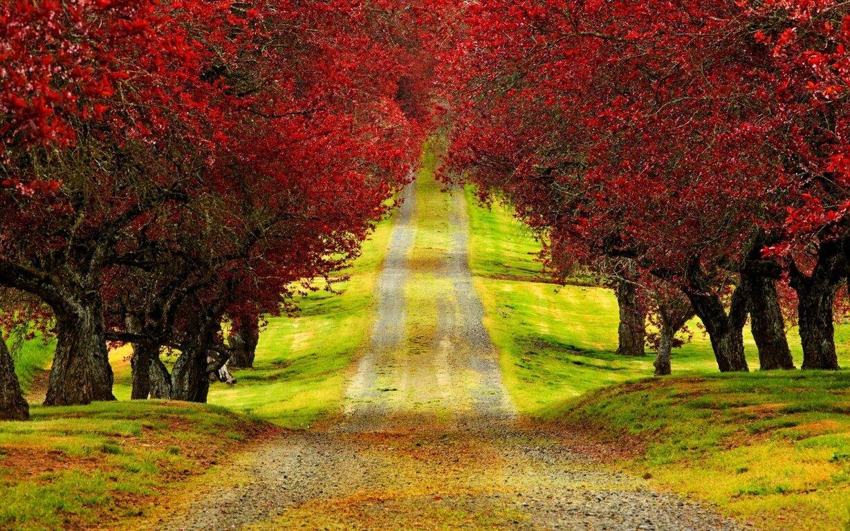 Road: Fall, Nature, Tree, Road, Path