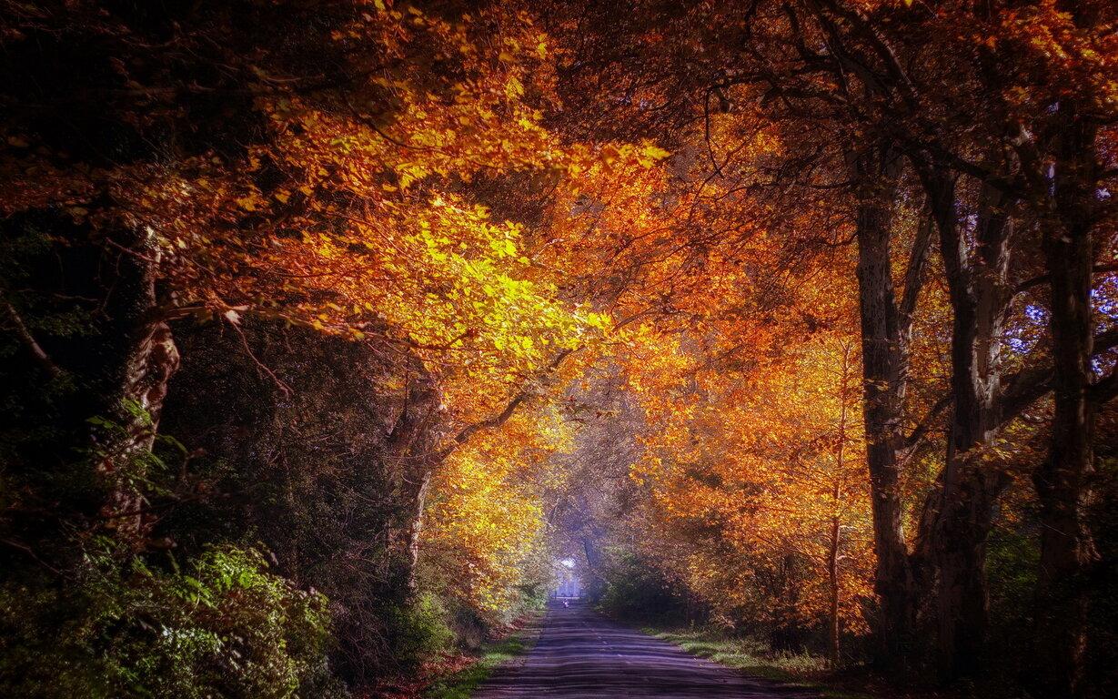 Road: Fall, Tree, Road, Foliage