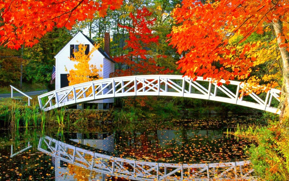 Bridge: Bridge, Fall, Reflection, House, Foliage, Pond