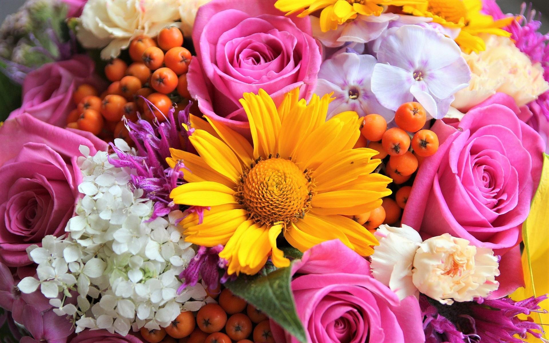 Flower: Квіти, Земля, Colorful, Yellow Flower, Pink Flower