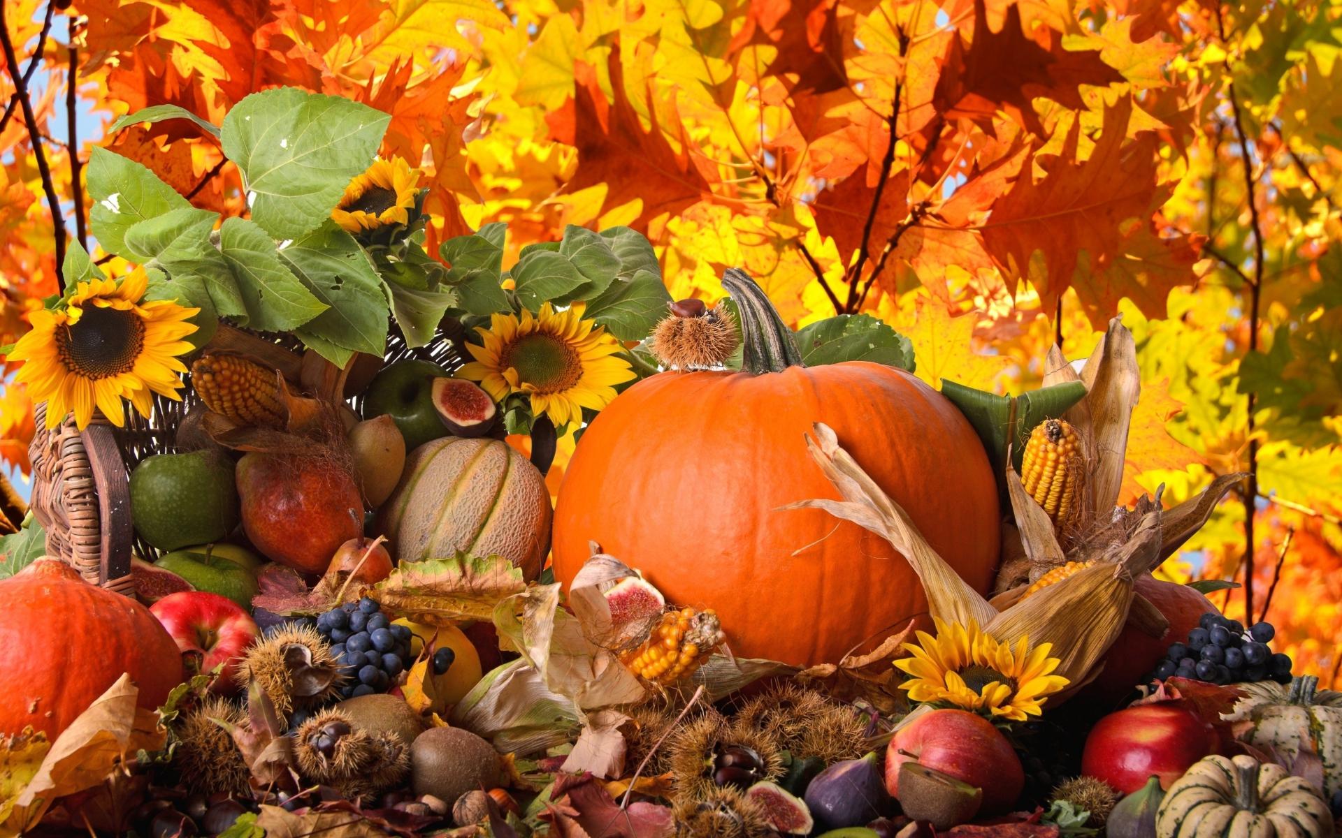 Thanksgiving: Flower, Leaf, Fall, Nature, Season, Thanksgiving