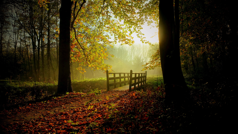 Bridge: Bridge, Fall, Forest, Tree