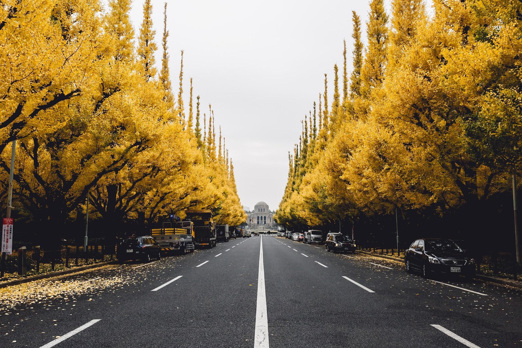 Road: Street, Leaf, City, Tree, Road