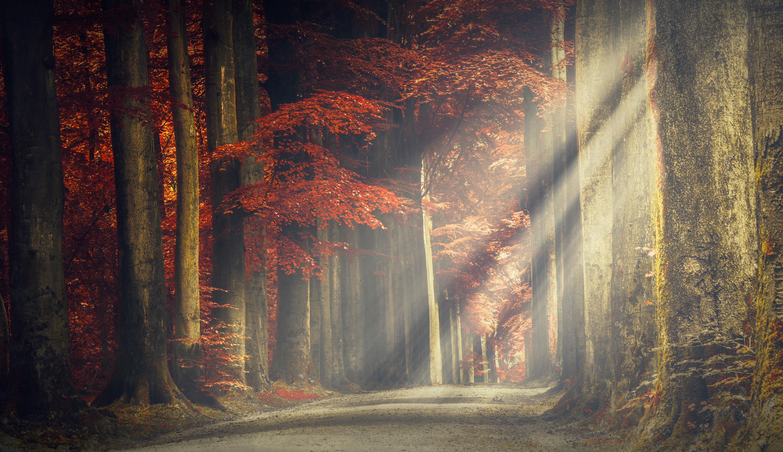 Road: Fall, Nature, Sunbeam, Road