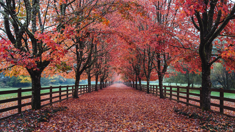 Road: Fall, Tree