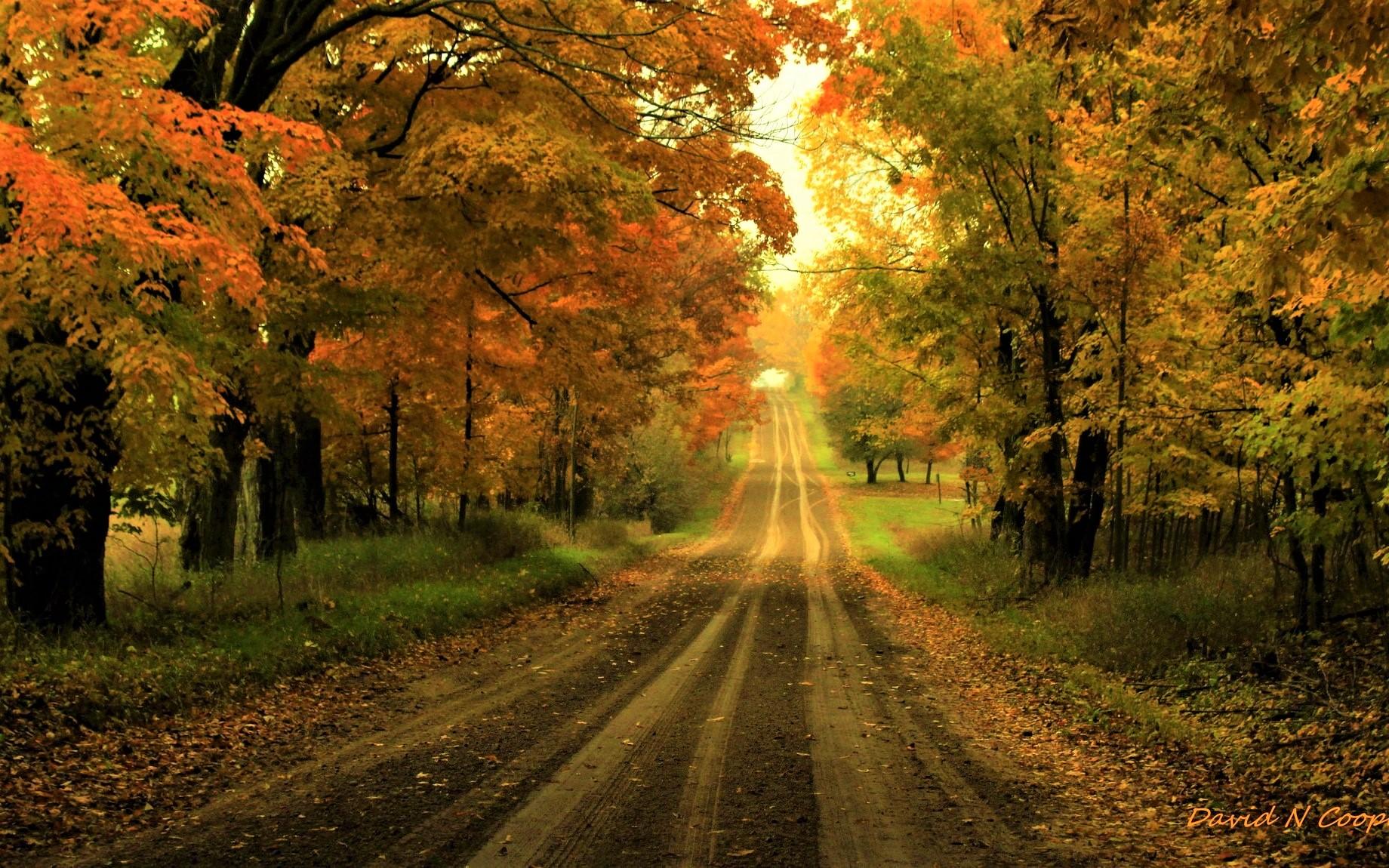 Road: Fall, Tree, Road, Foliage, Dirt Road