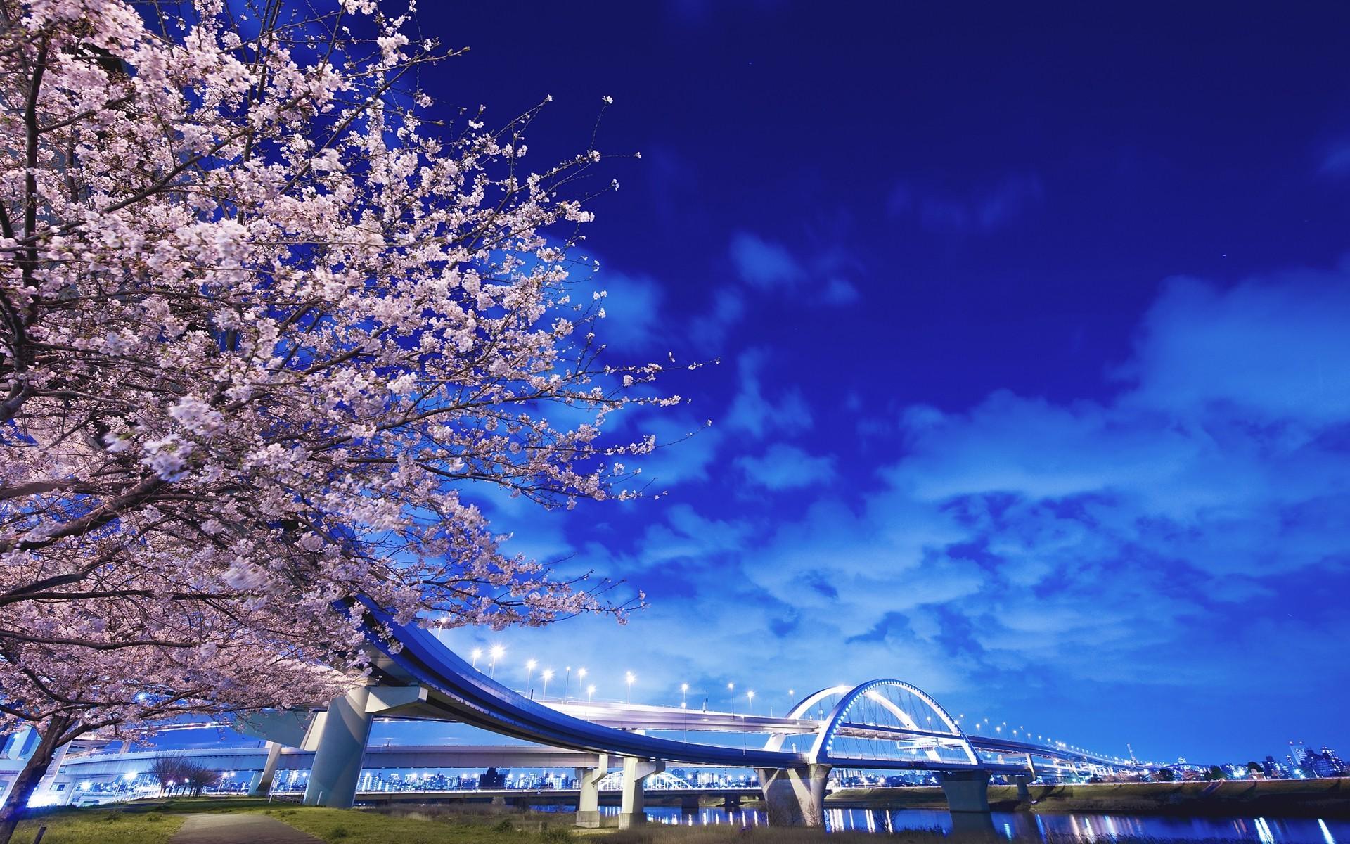 Bridge: Bridge, City, Cityscape