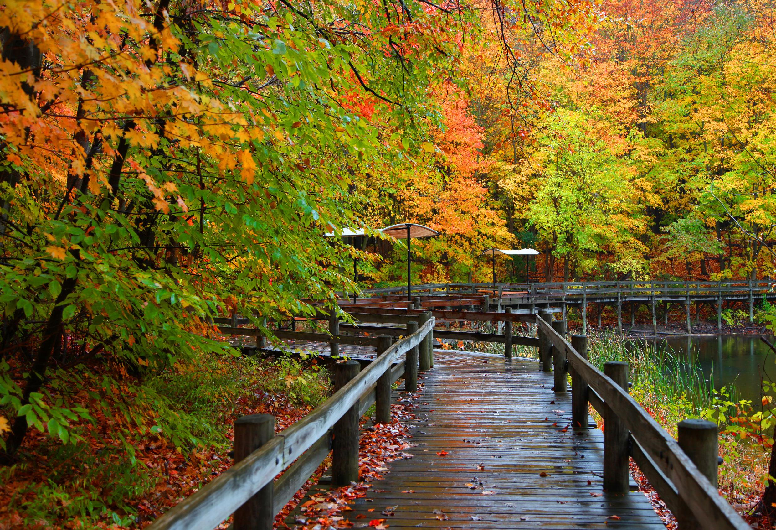 Bridge: Bridge, Fall, Forest, Tree, Foliage